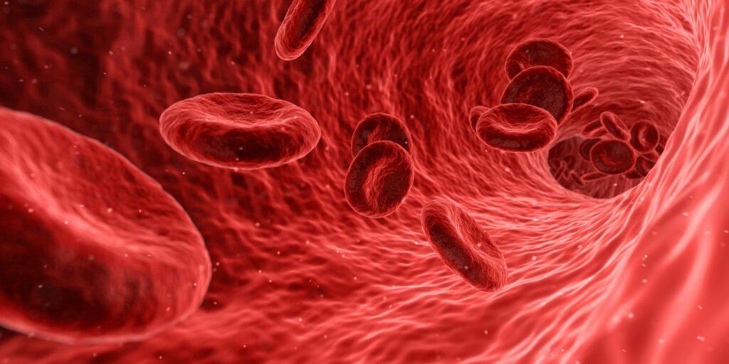 Vegane Ernährung: Wichtige Bluttests
