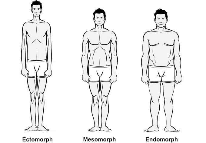 Darstellung der verschiedenen Körpertypen: Ectomorph, Mesomorph und Endomorph.